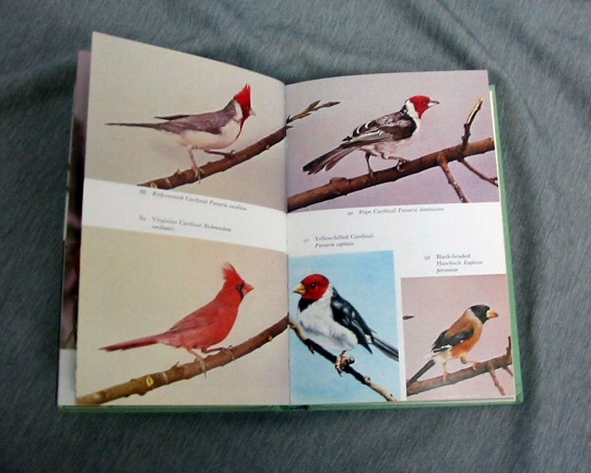 THE HANDBOOK OF FOREIGN BIRDS Their Care in Cage and Aviary, Rutgers, A.