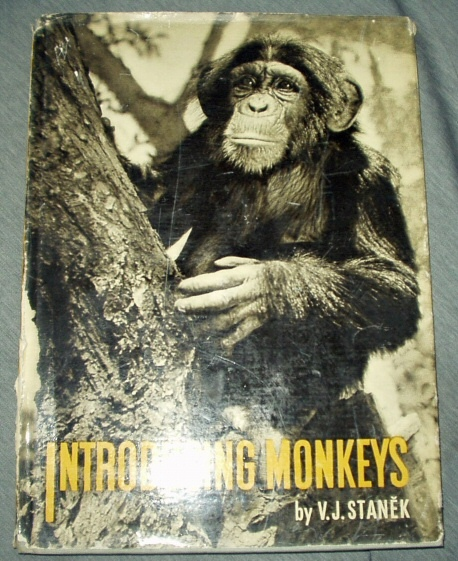 Image for Introducing Monkeys