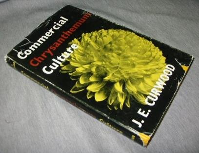 Commercial chrysanthemum culture, Curwood, J. E