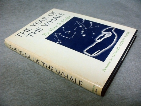 Image for The Year of the Whale