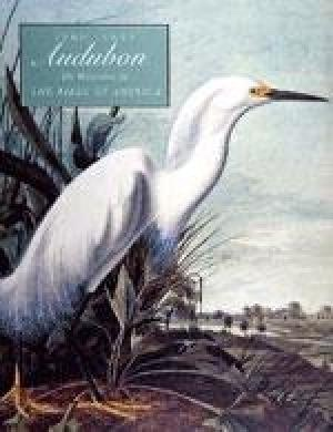 John James Audubon,   The Watercolors for the Birds of America, Blaugrund, Annette